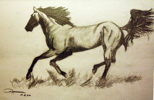 pencil sketch of a horse