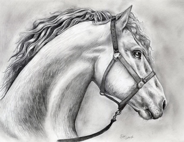 horse head drawing with pencil