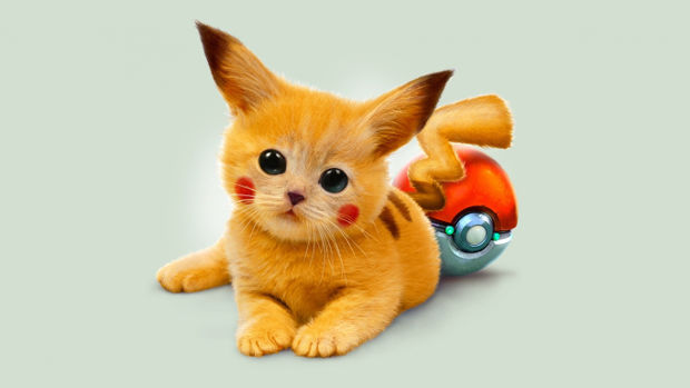 cute kitty with pokeball