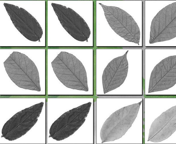 Leaf Brush Set