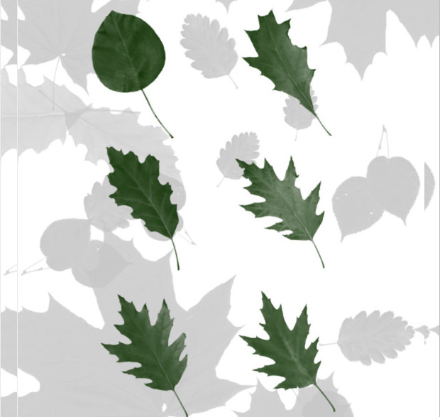 180+ Leaves Brushes