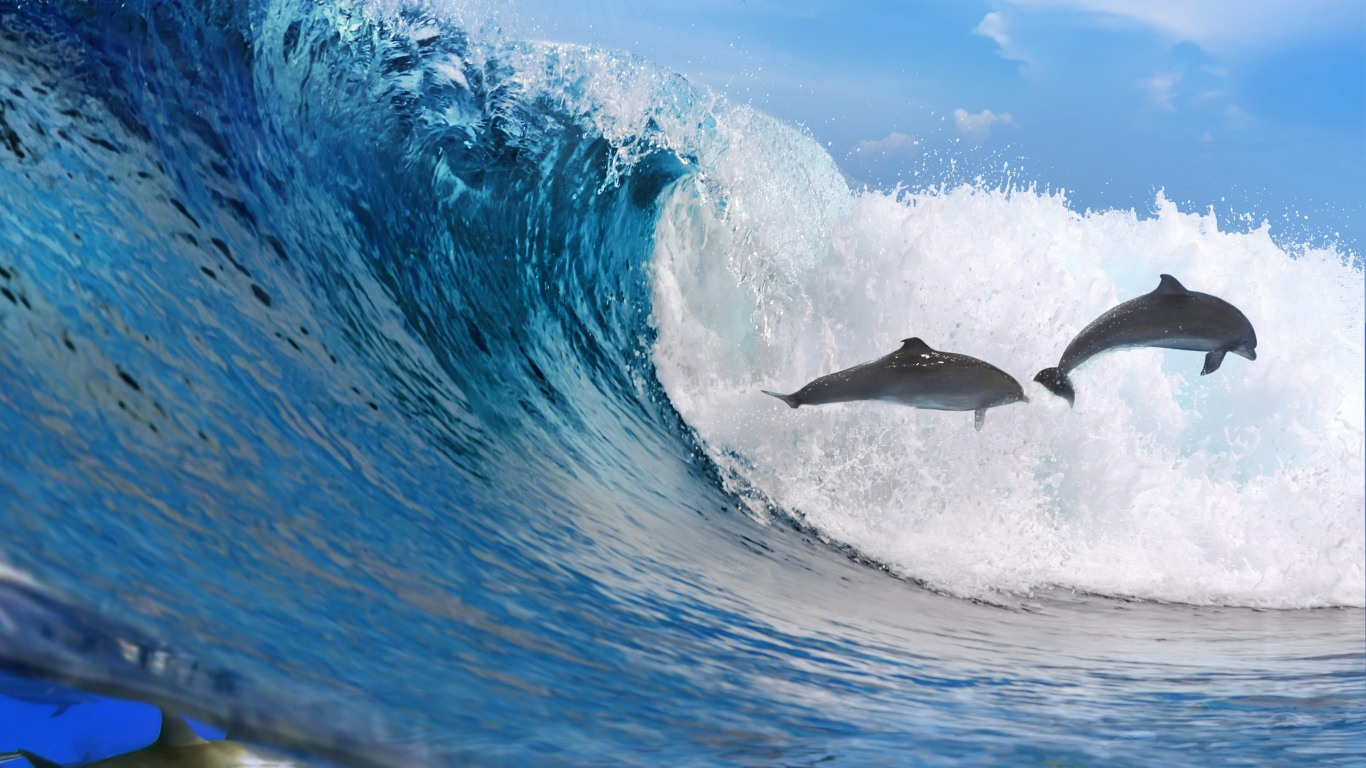 Ocean Wave Dolphins Wallpaper