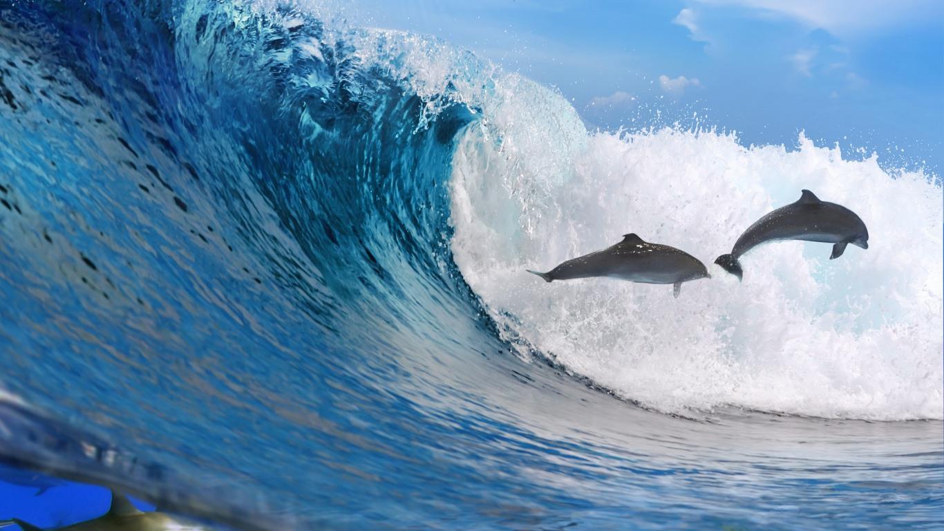 ocean wave dolphins wallpaper