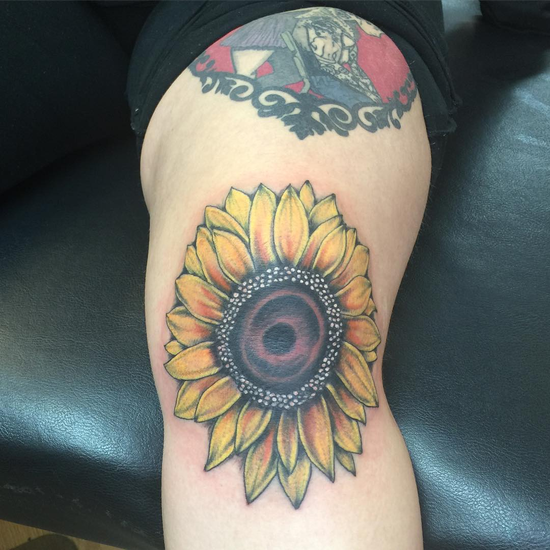 Yellow Colored Sunflower