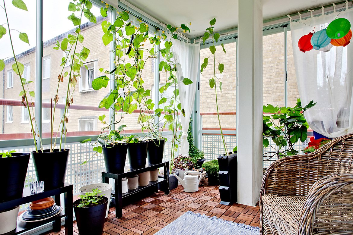 Indoor Home Garden Potted Plants