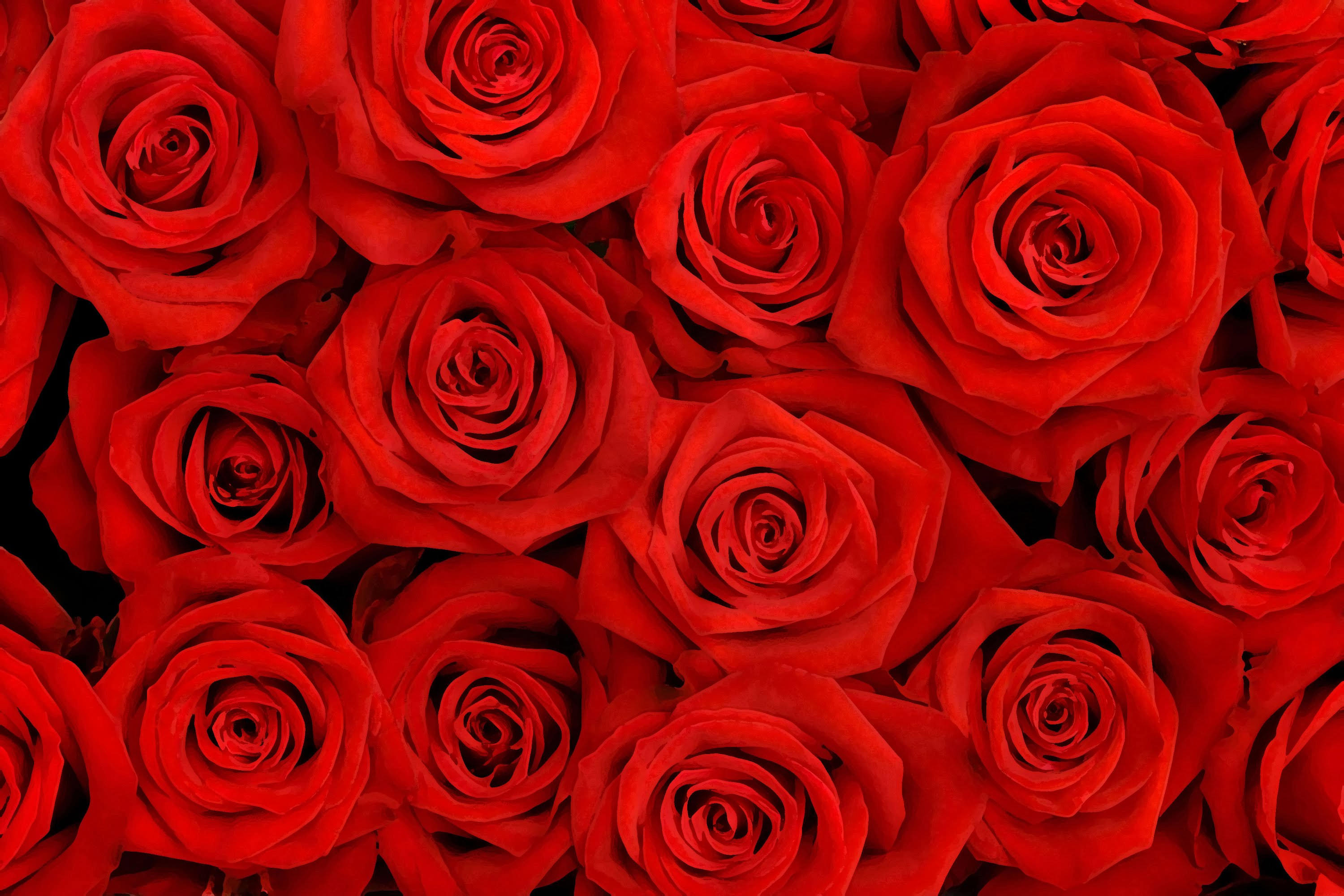 Stunning Red Roses Background