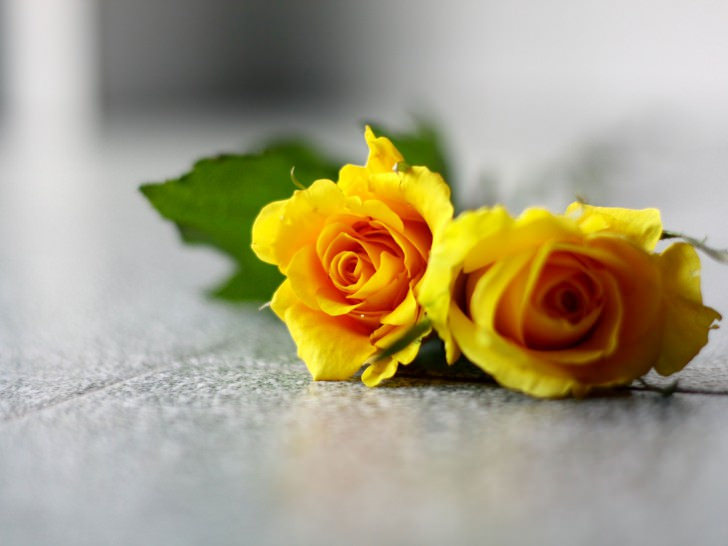 Yellow Roses Pair Wallpaper
