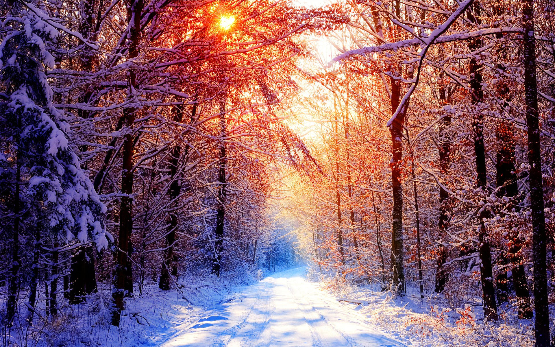 Sunset Winter Snowy Forest