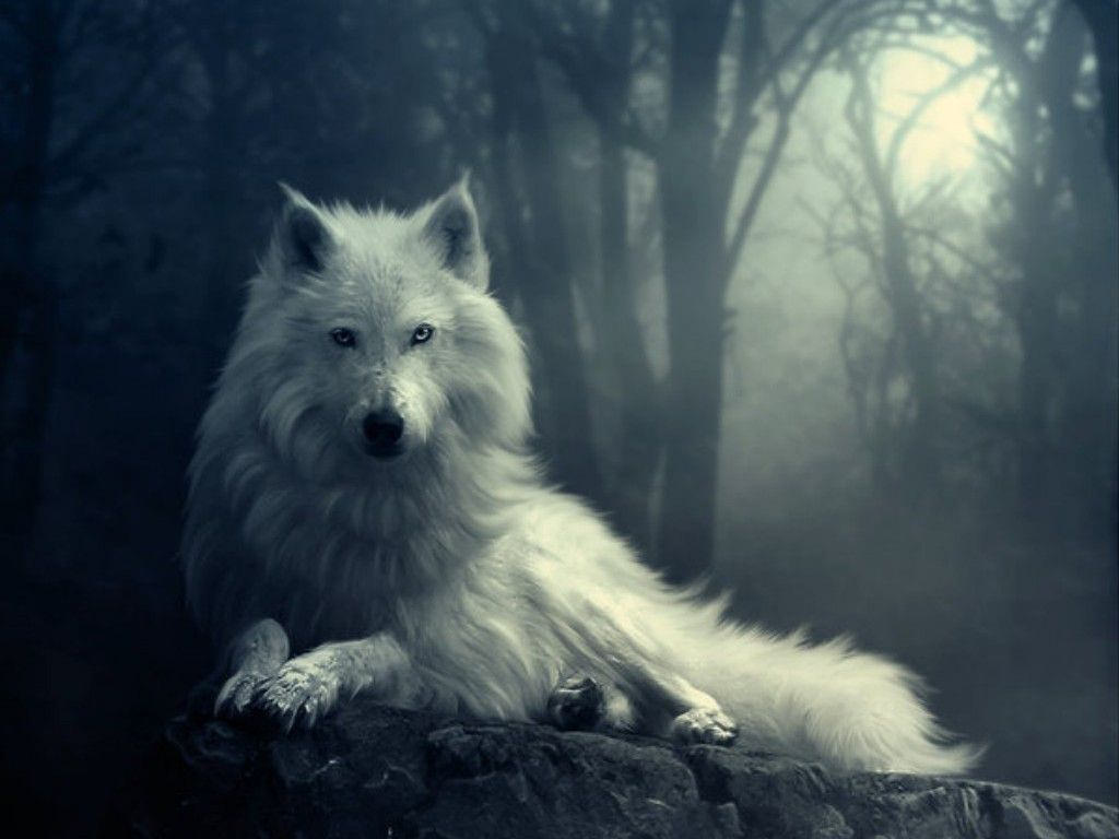 White Colored Wolf Wallpaper