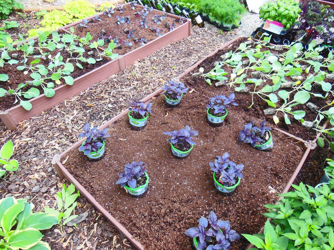 full shade vegetable garden color block planting
