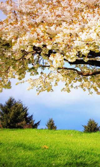 flowering landscape e1459253357161