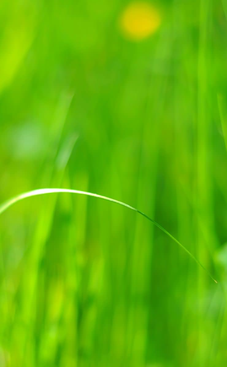 green grass defocus background