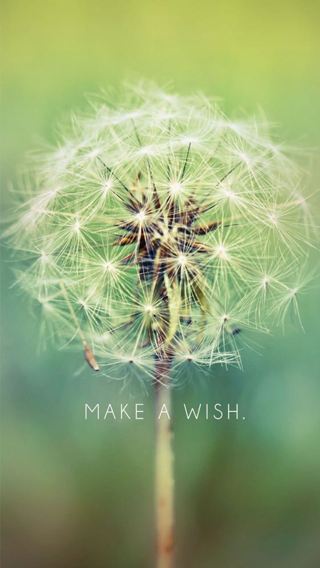 make a wish dandelion iphone 5 wallpaper