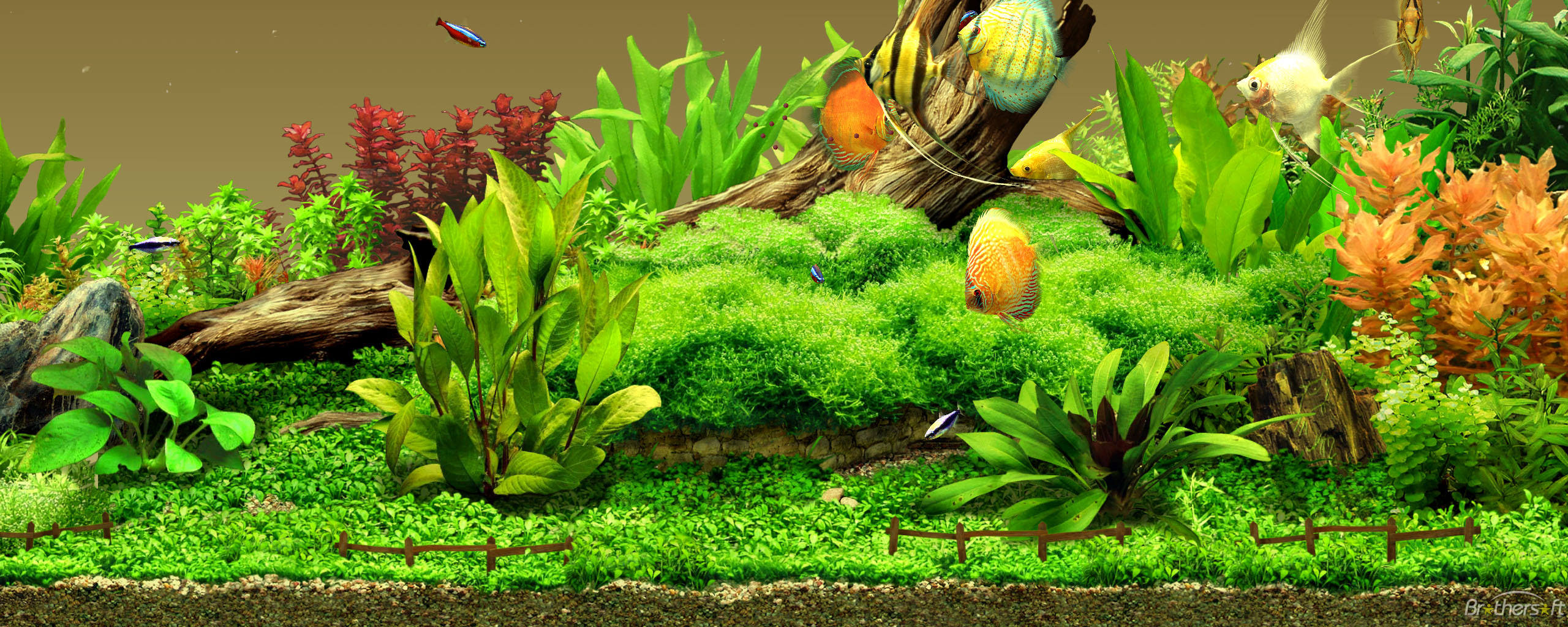 freshwater aquarium background