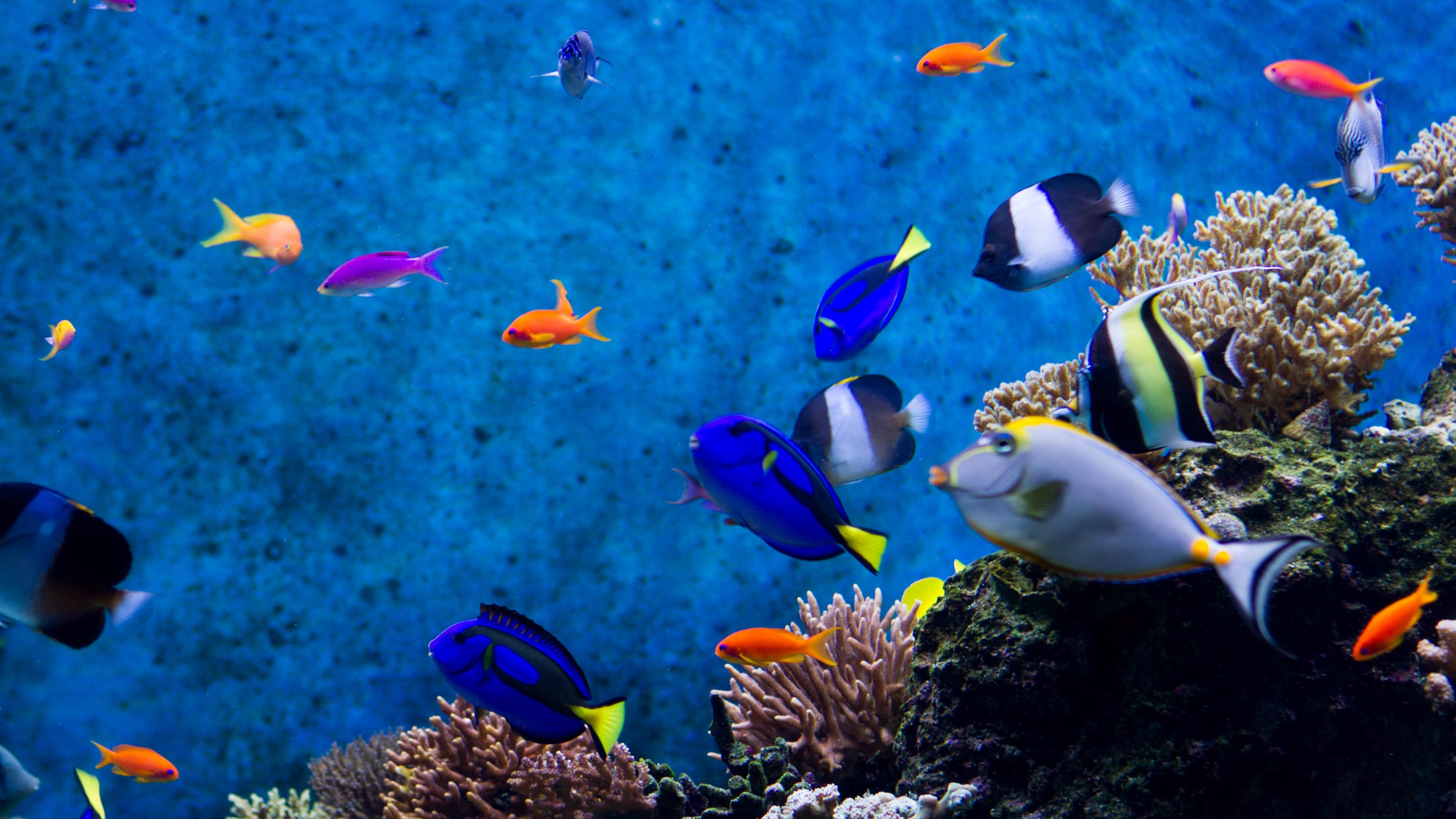 Aquarium Fishes Ultra HD