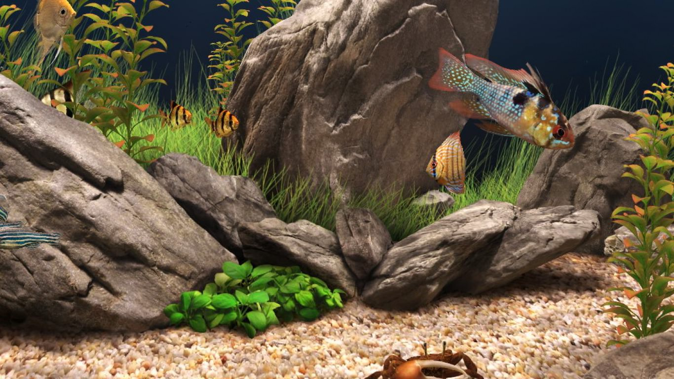 Big Rocks and Fishes Aquarium Background