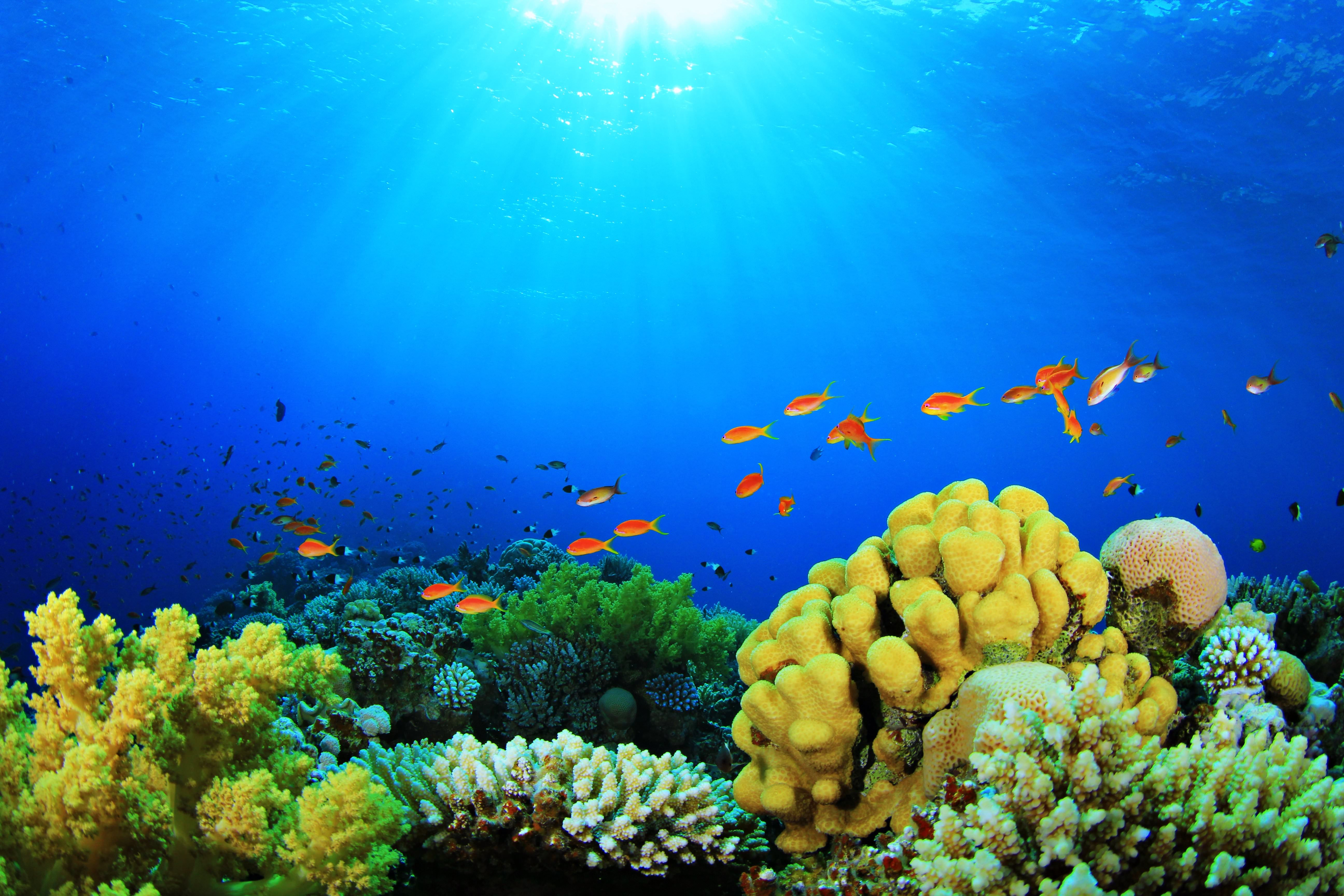 aquarium backgrounds coral - photo #1