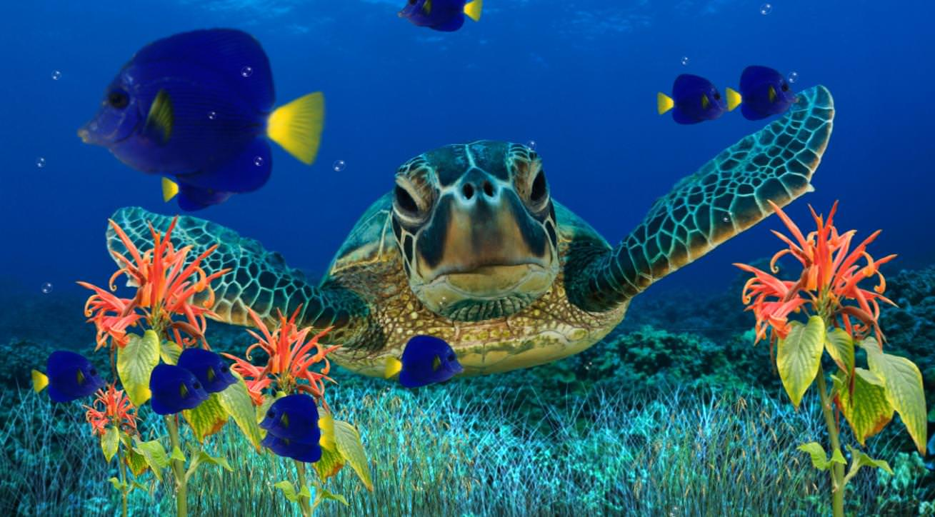 coral reef animated aquarium background