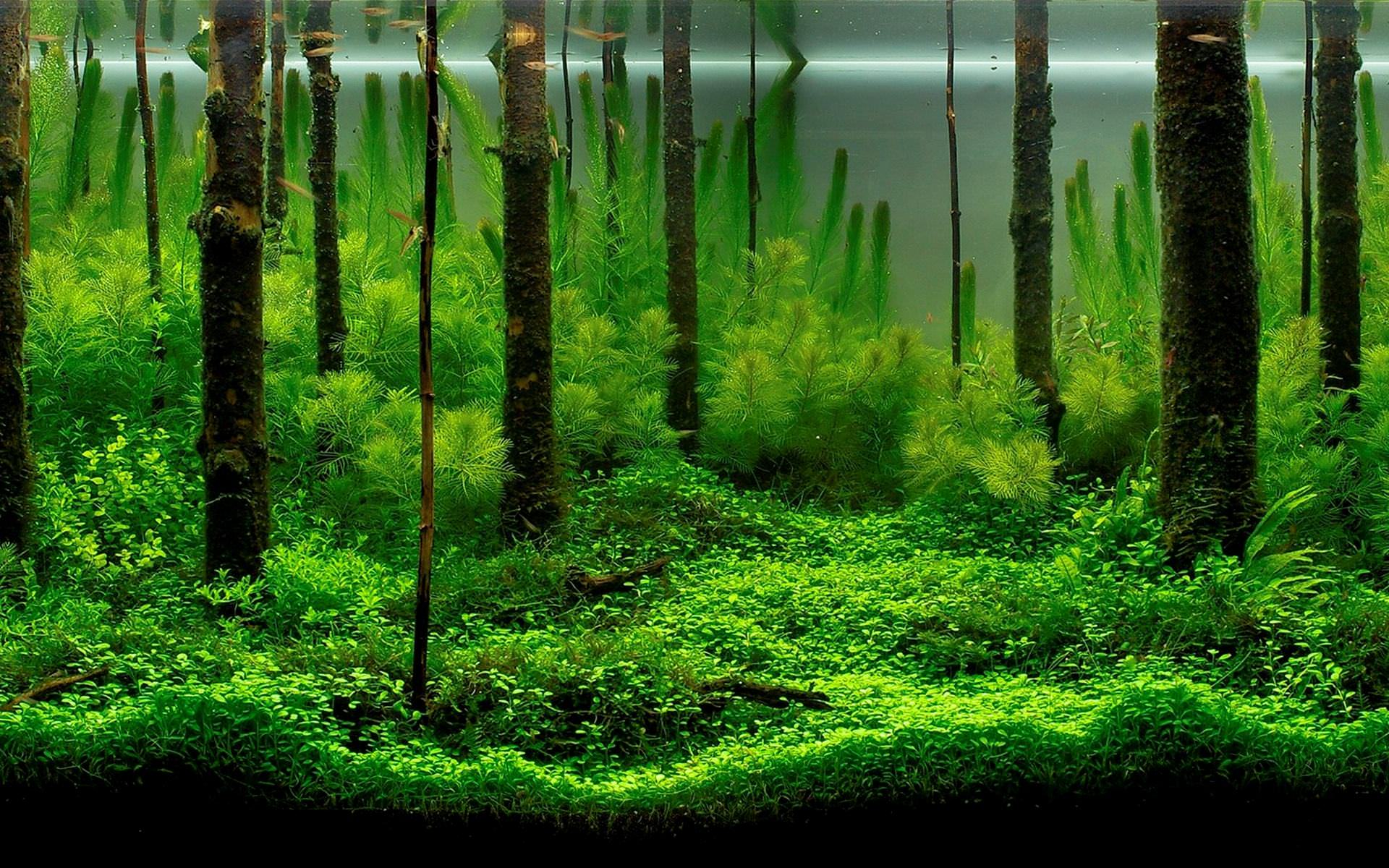 small aquarium background