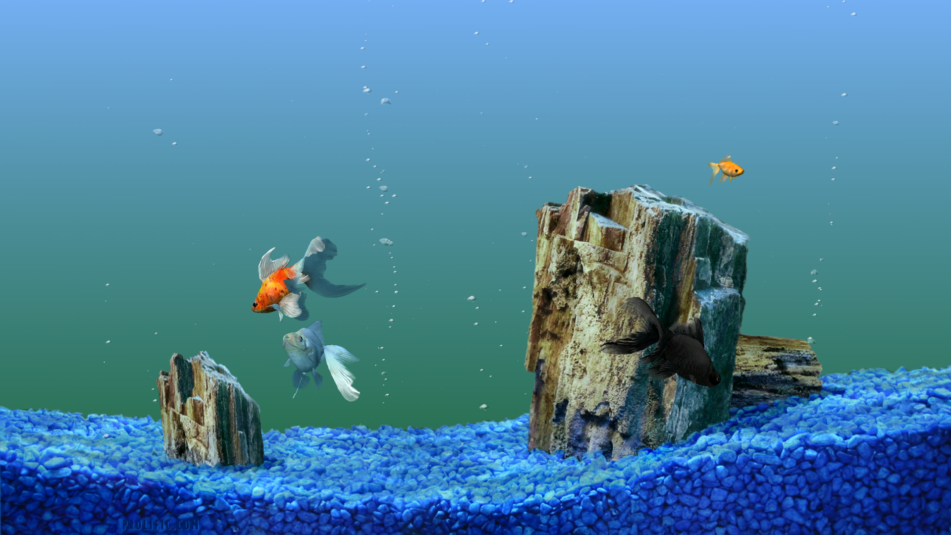 animated fish tank background