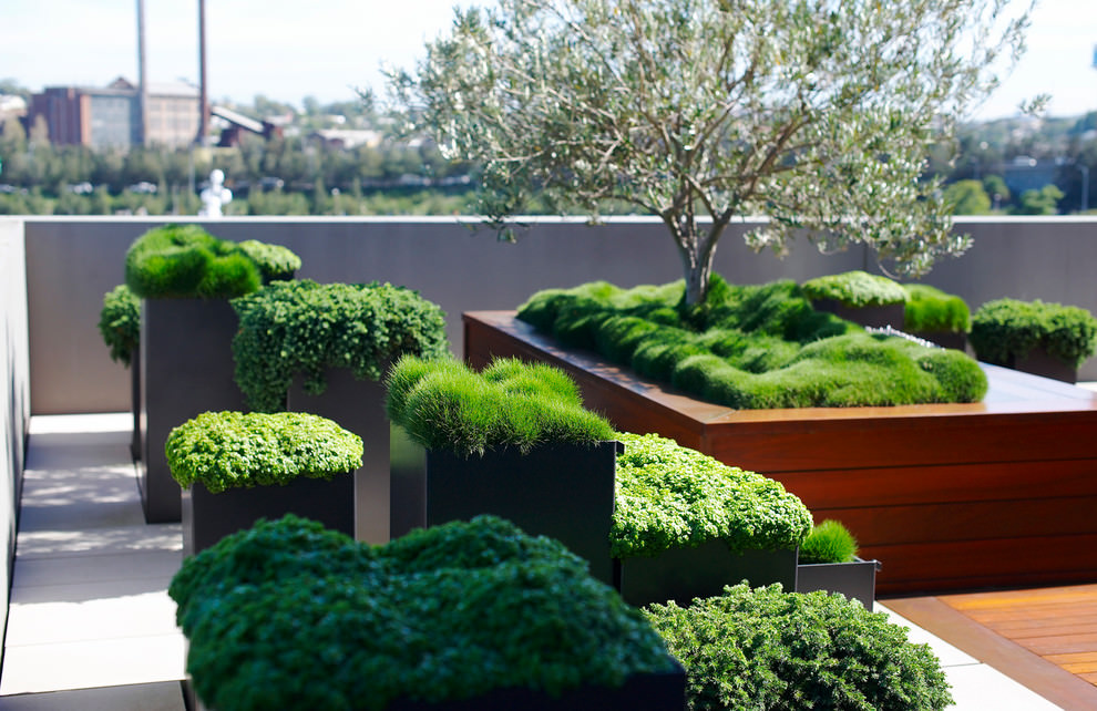 Elegant Roof Top Garden