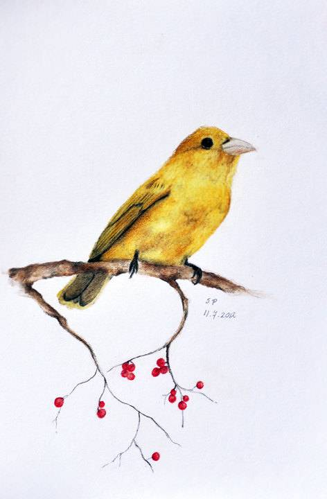 bird and red berries coloured pencil drawing