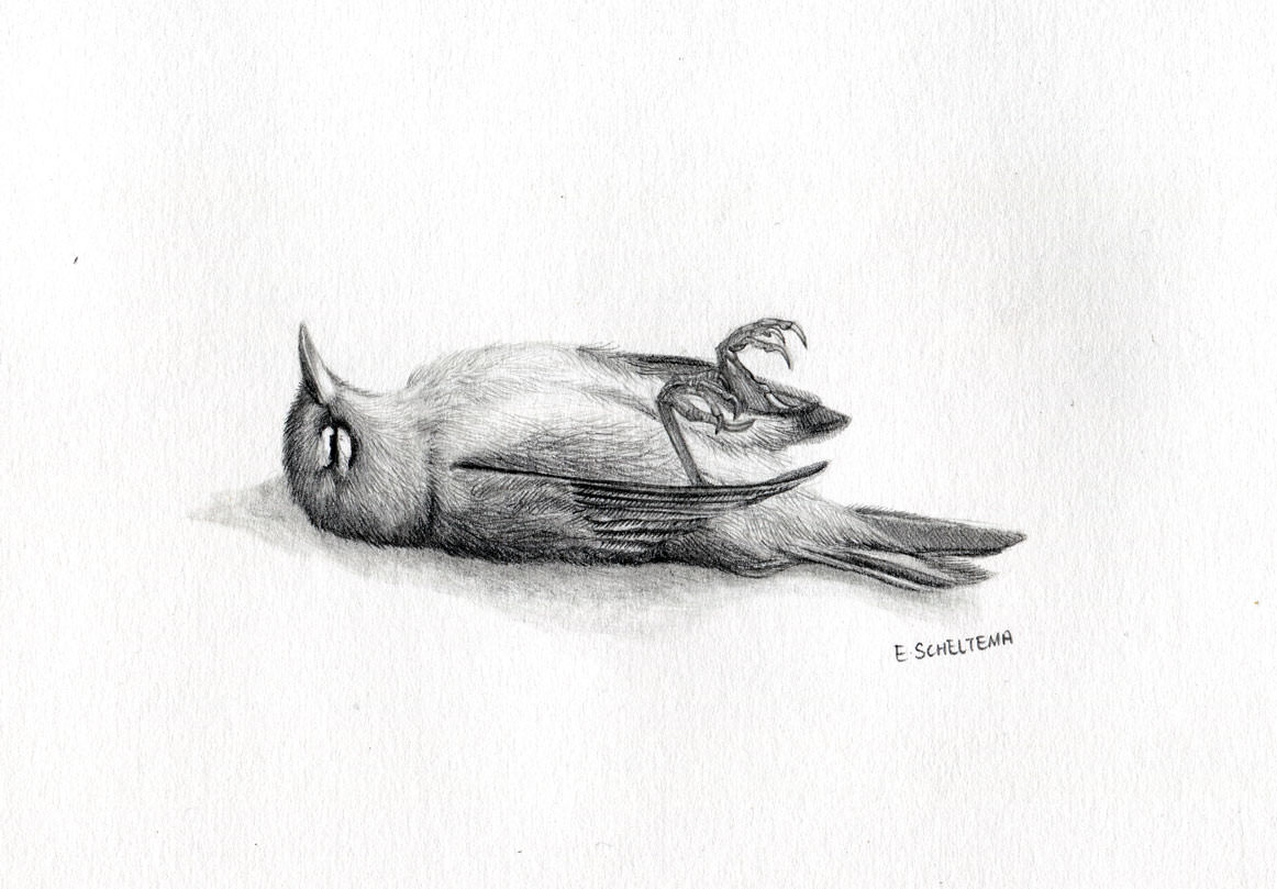 dead bird drawing