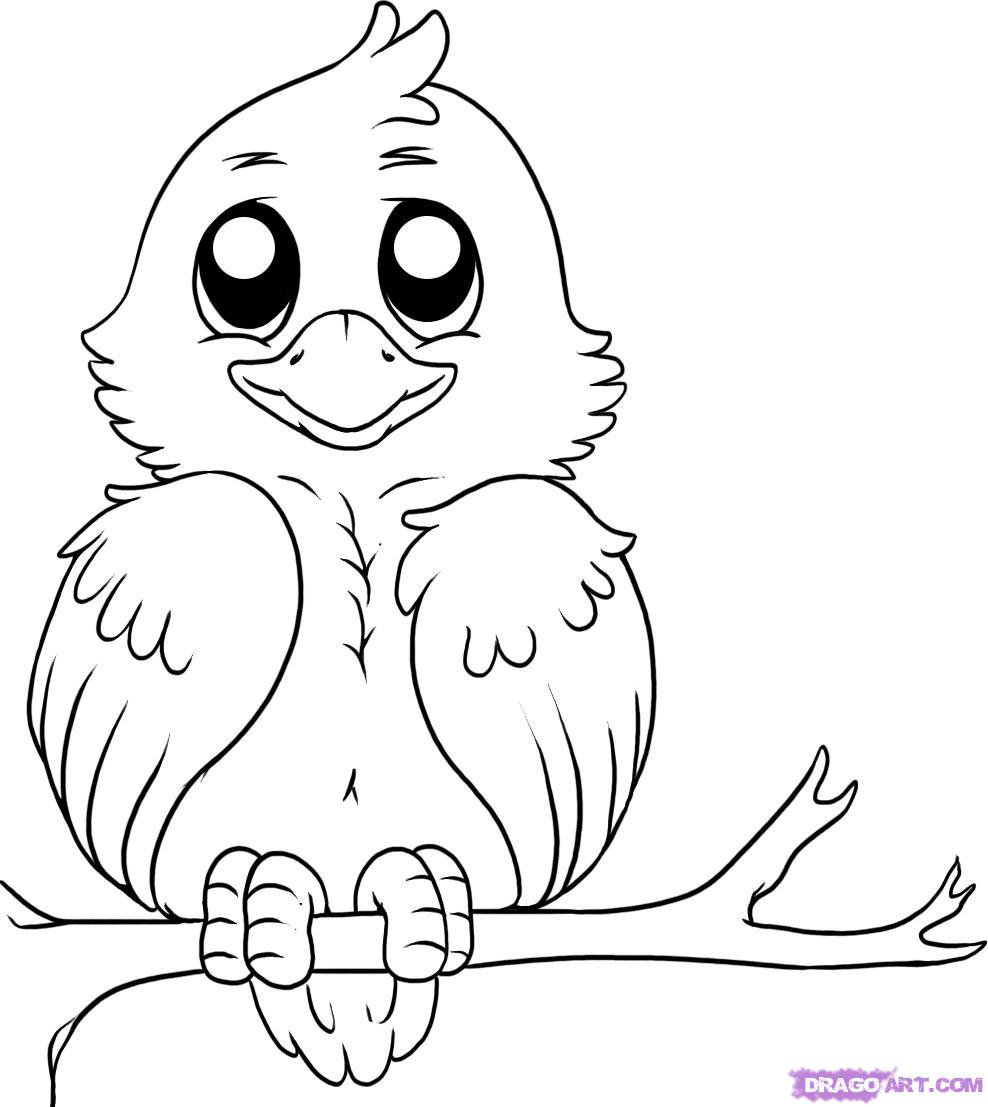 Cartoon Bird Drawing