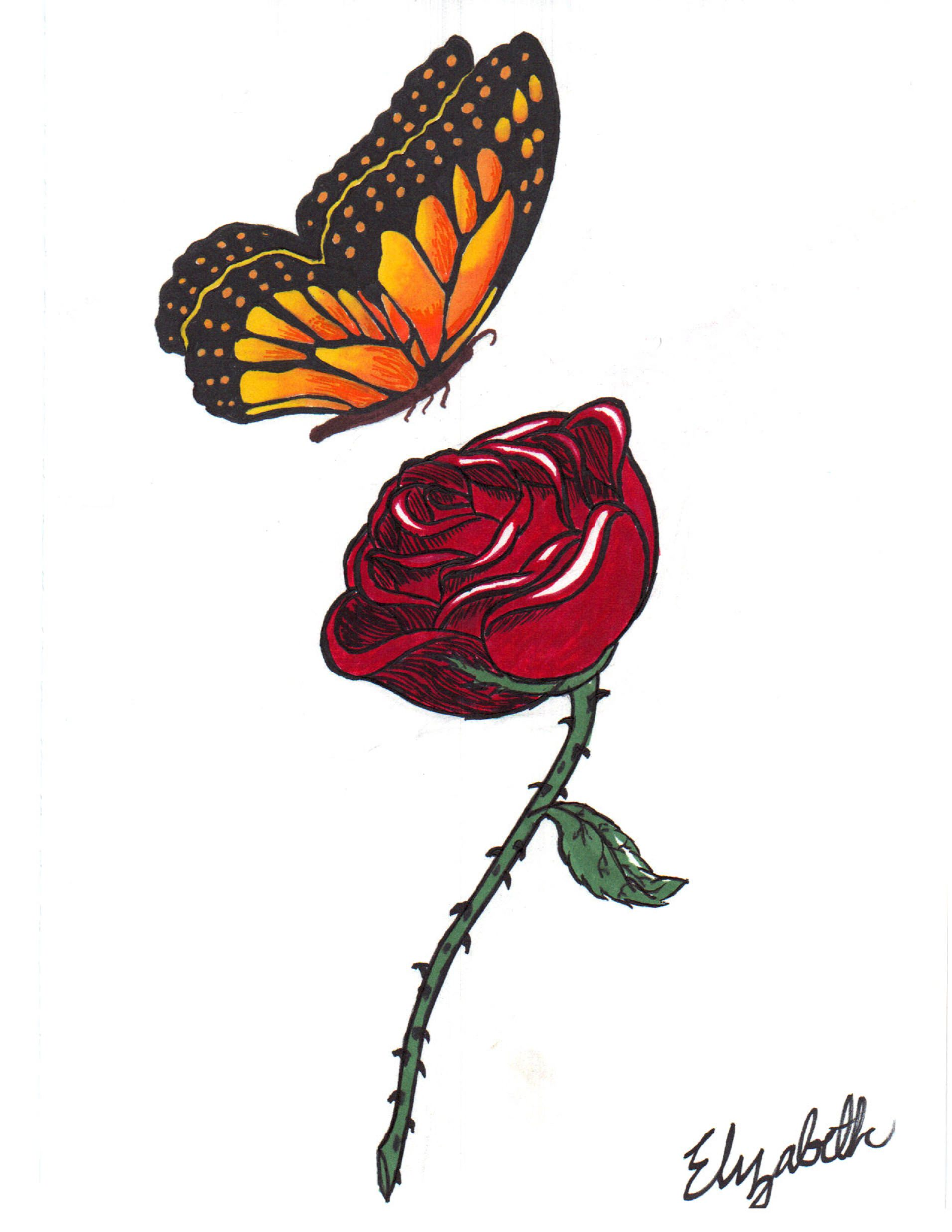 Butterfly with Rose Drawing