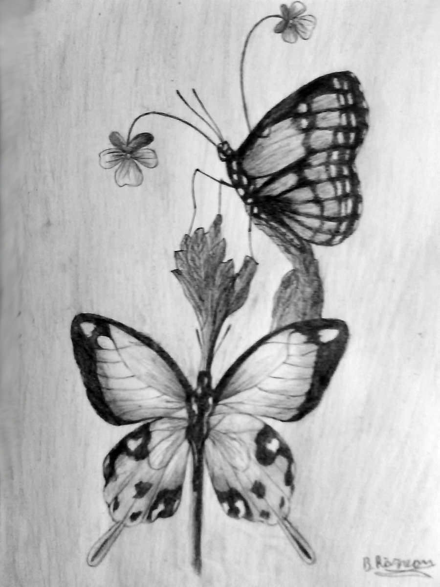 Beautiful Butterfly Drawing with Flowers