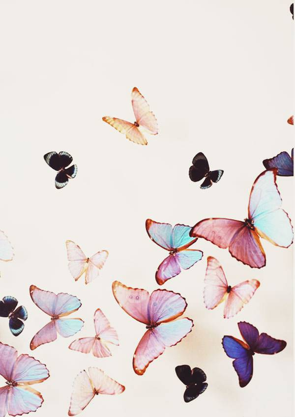Pink Colour Butterflies