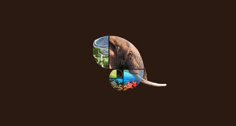 Fibonacci Elephant Logo Collage
