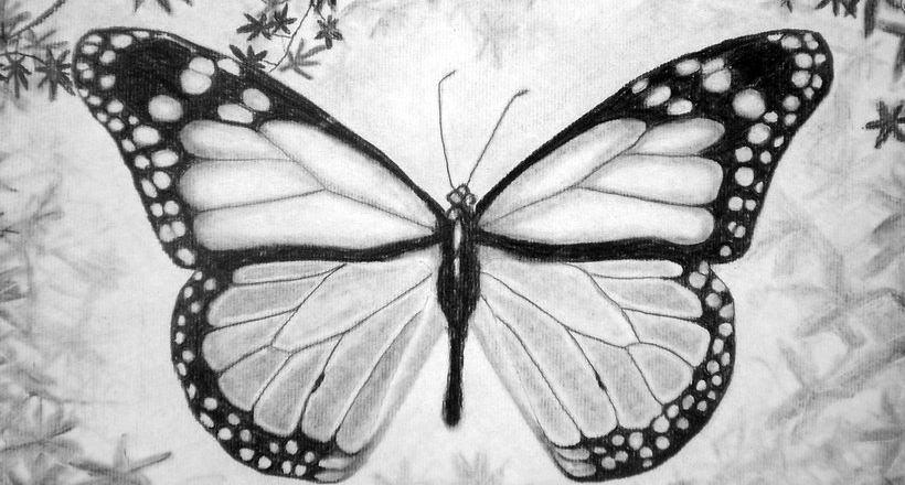 16 Butterfly Drawings Art Ideas Design Trends Premium Psd