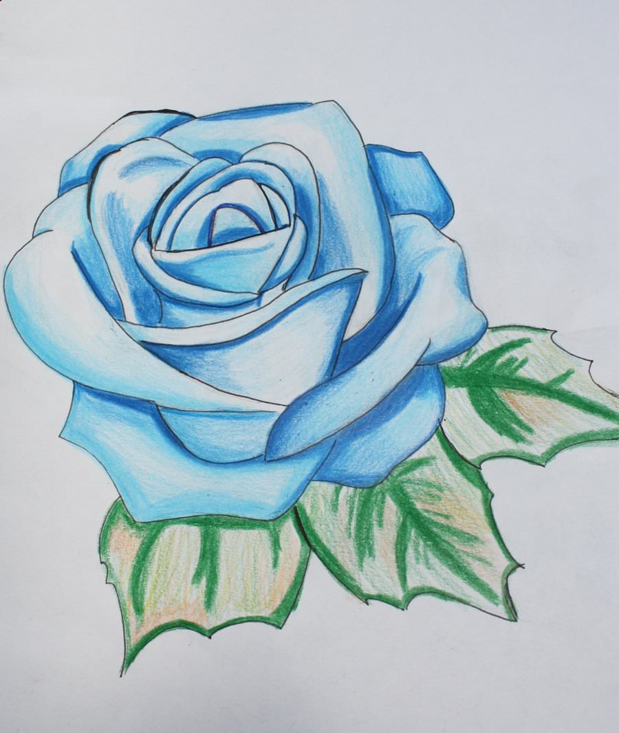 Attractive Rose Drawings
