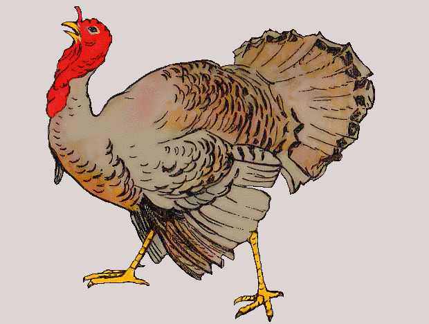 New Turkey Clipart