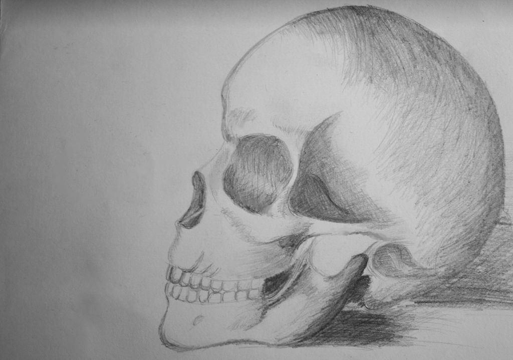 Side Skull Pencil Drawing