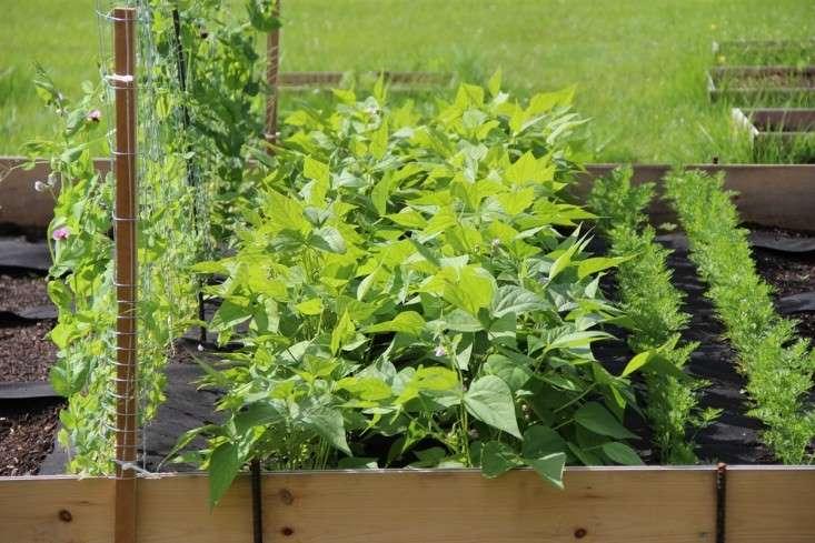 instant edible garden