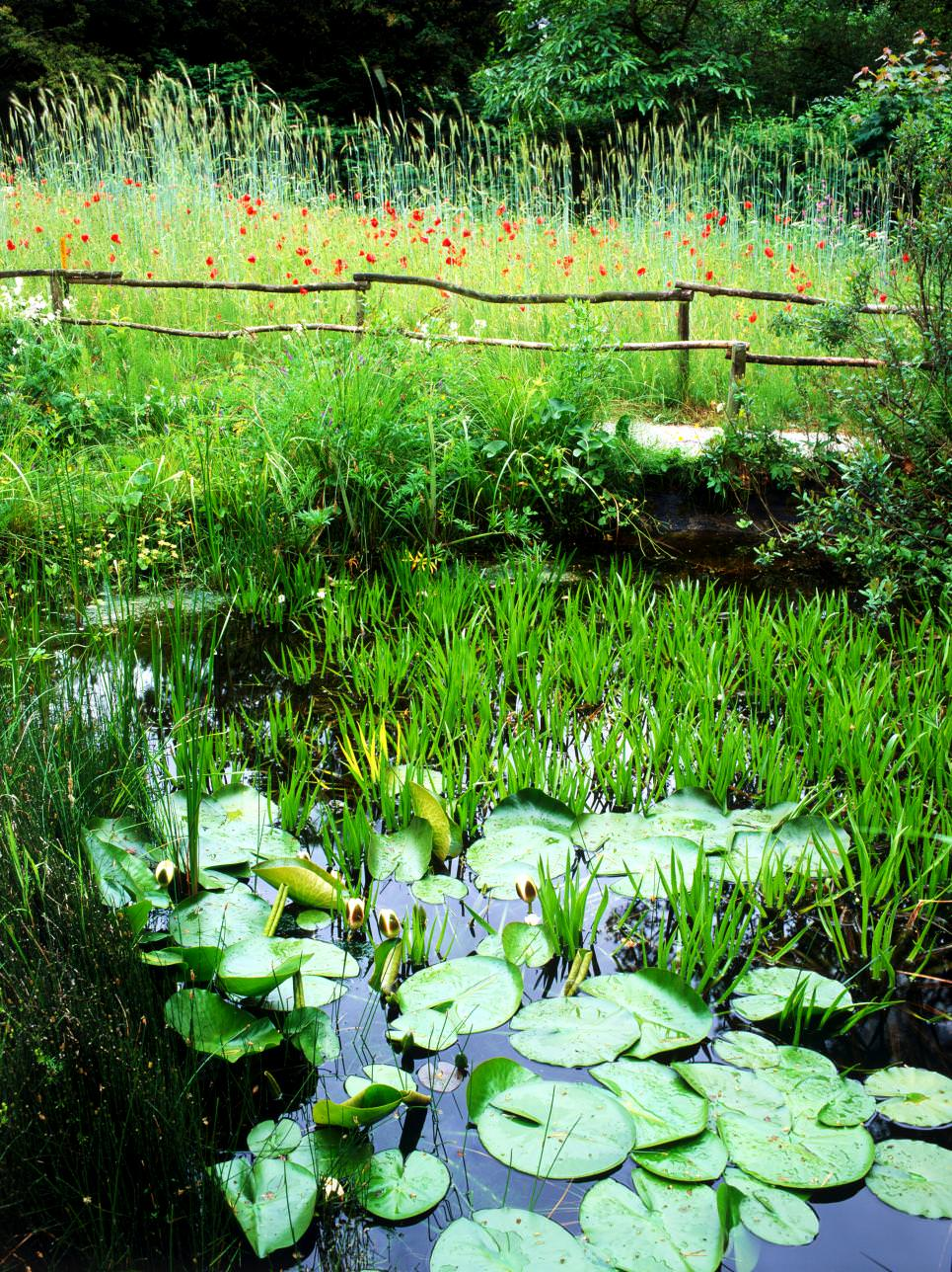 25+ Backyard Pond Designs | Outdoor Designs | Design ...