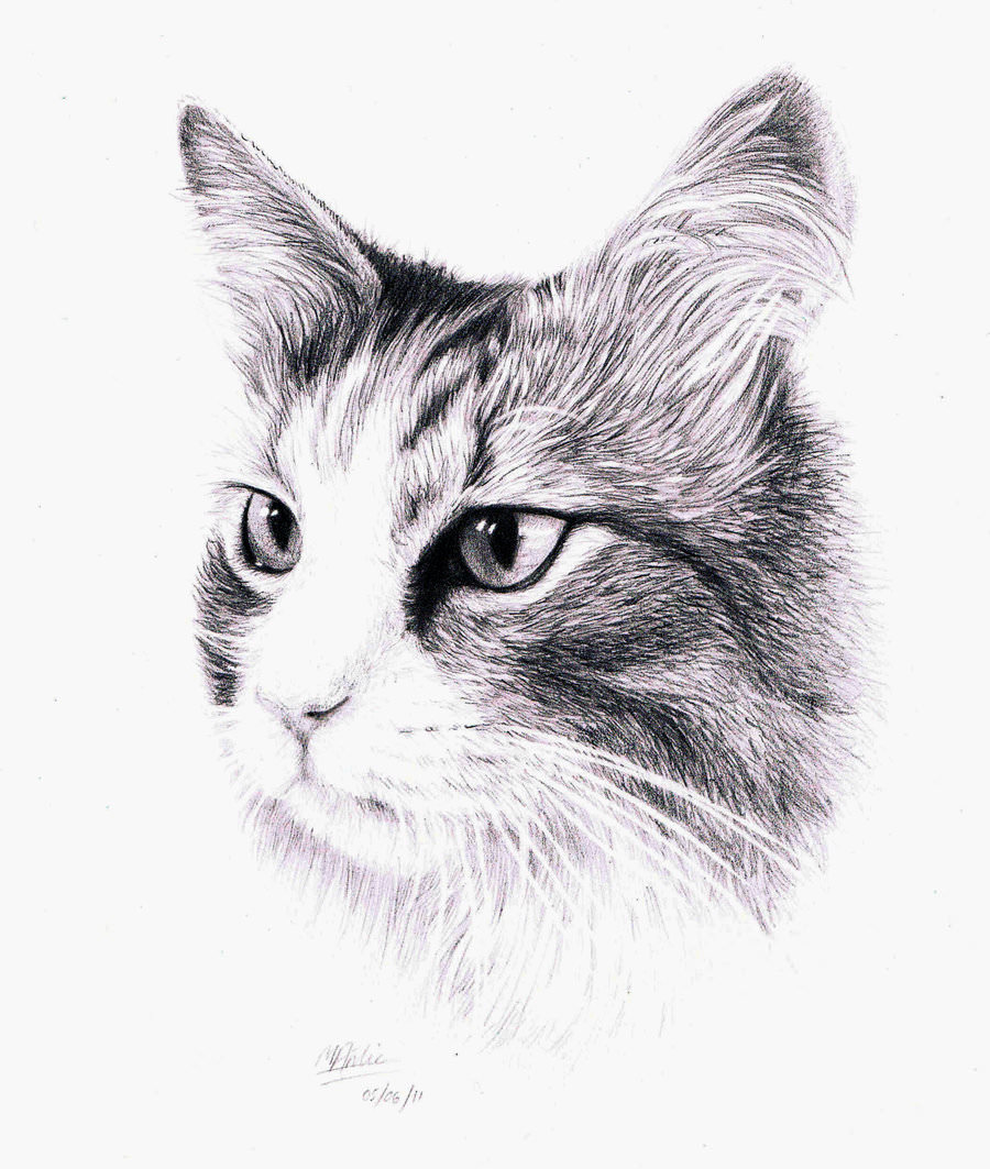 a drawing of a cat head
