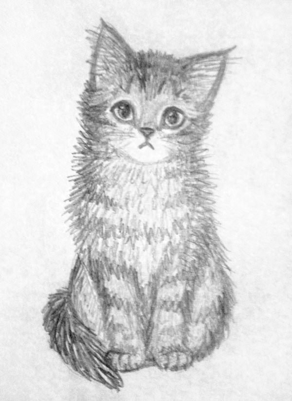 This is a photo of Geeky Cute Kitten Drawing