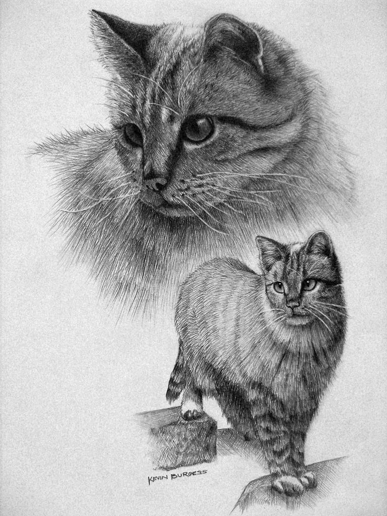 Beautiful Cat Drawing