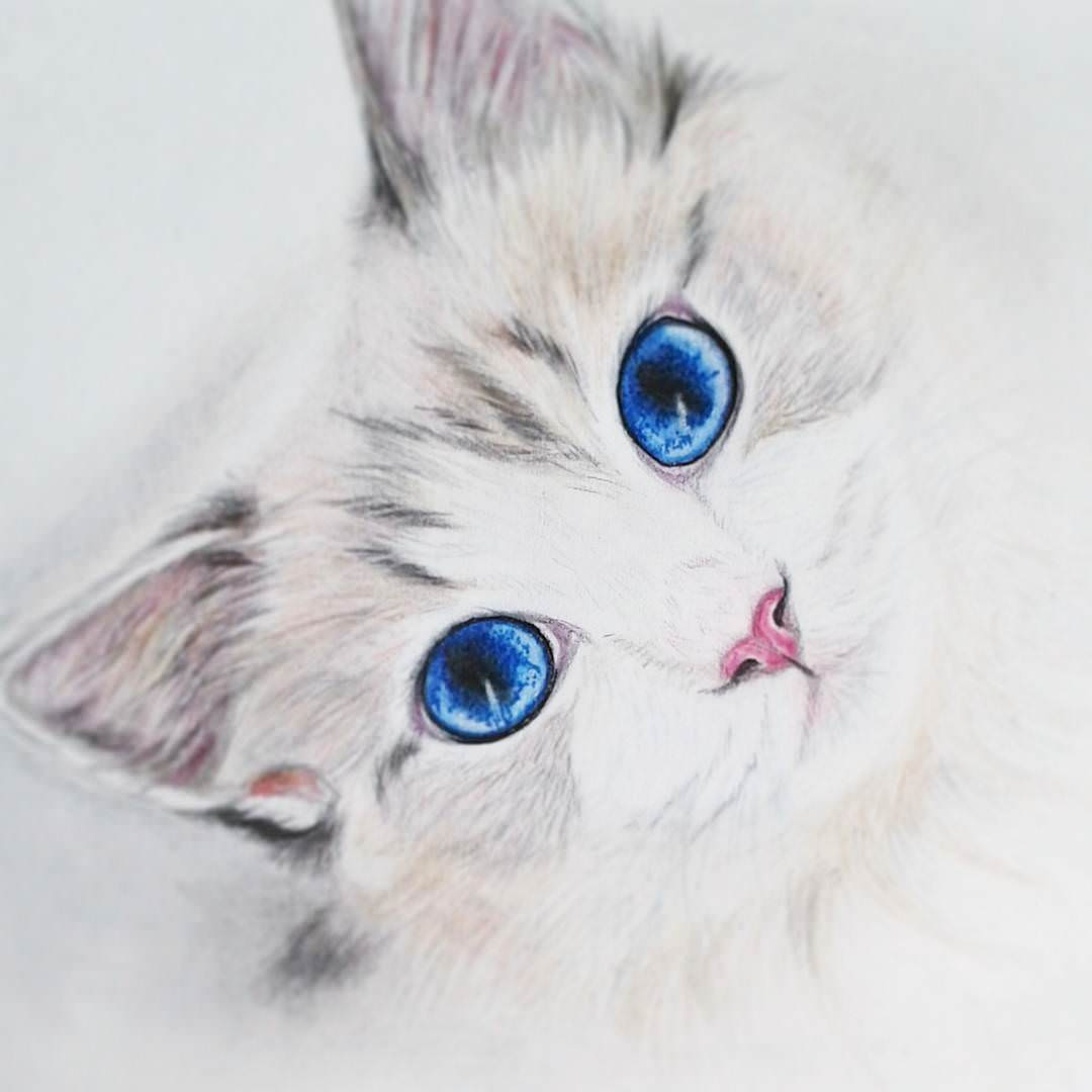 Connu 19+ Cat Drawings, Art Ideas, Sketches | Design Trends - Premium  CF26