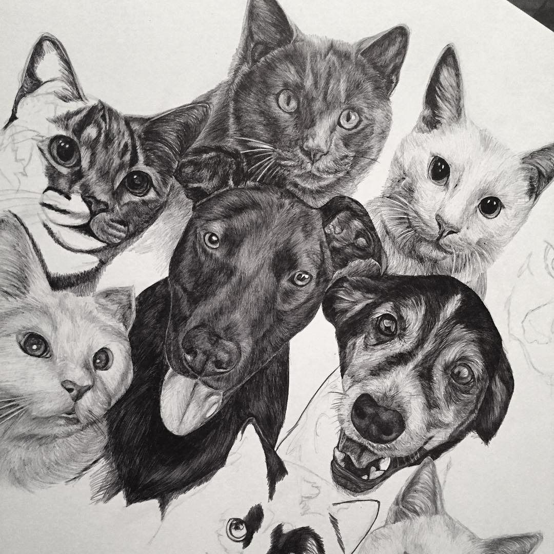 Cat and DoG Drawing