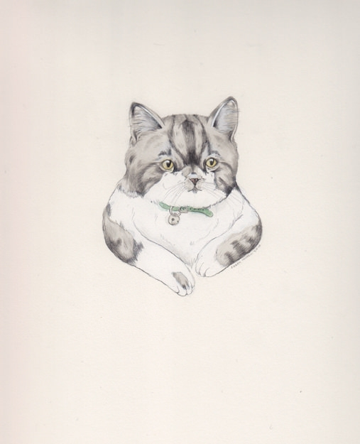 chubby cat drawing