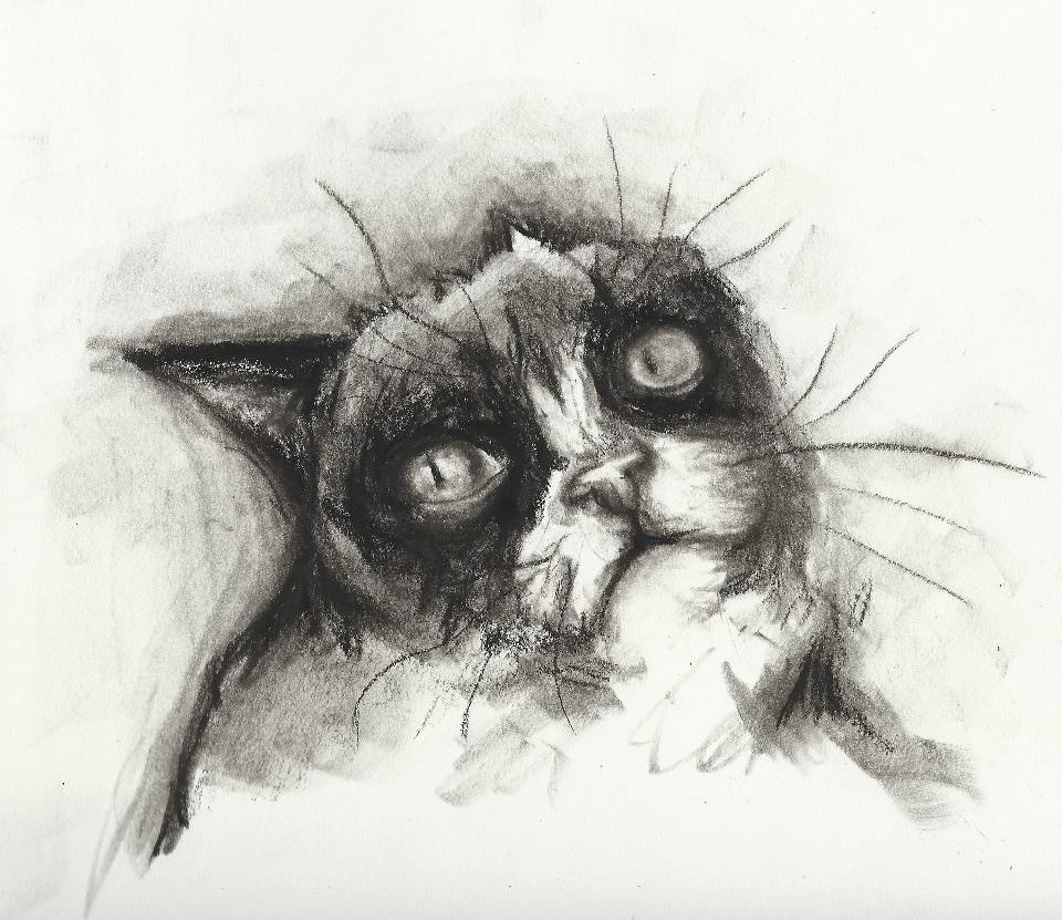 tard cat charcoal drawign