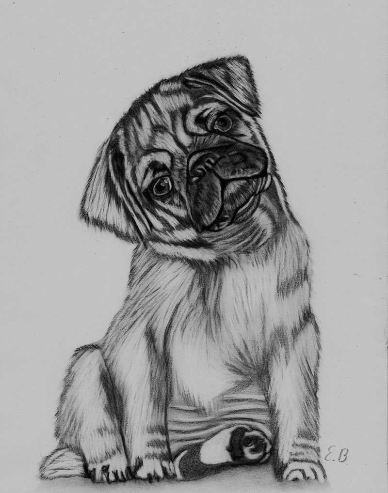 cute dog charcoal drawing