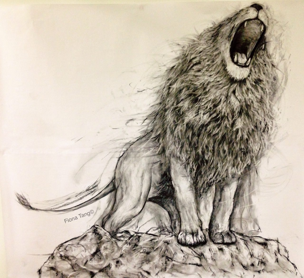 the lion roaring charcoal drawing