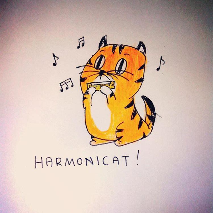 cat playing harmoni