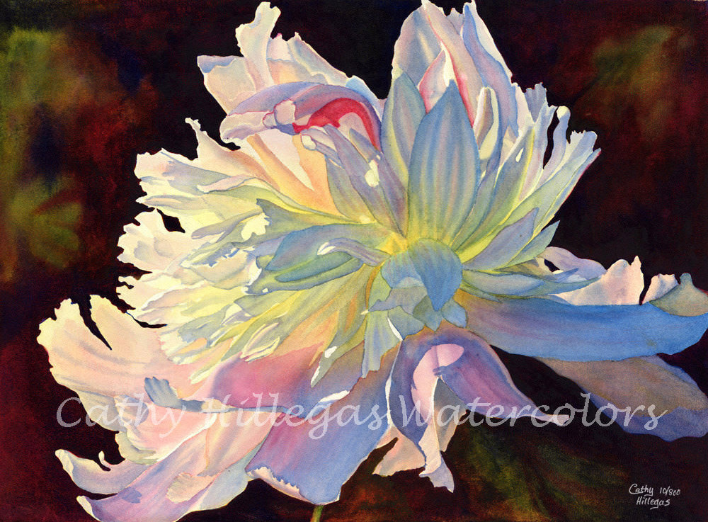 white peony watercolor painting