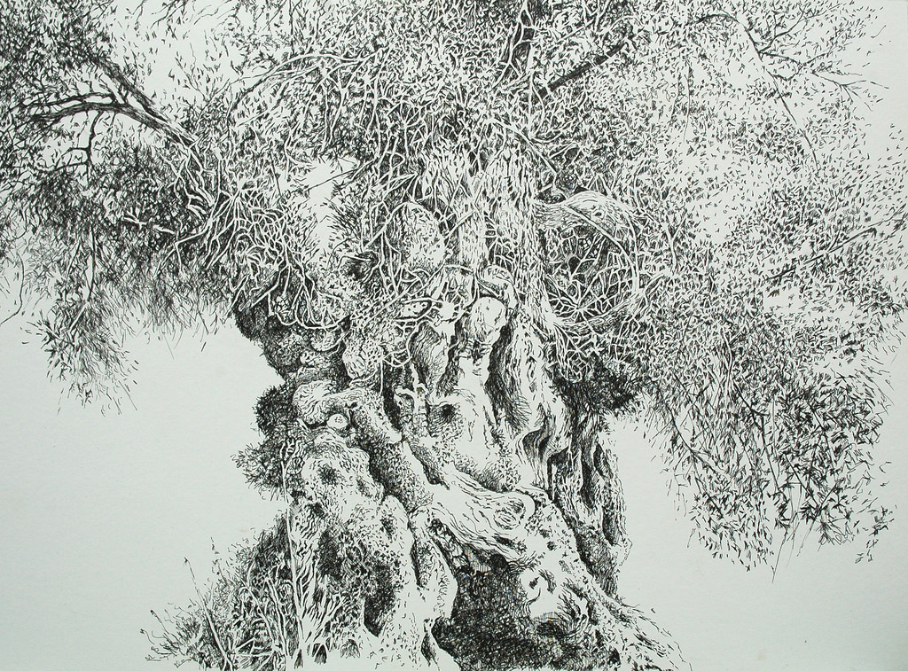 Vintage Olive Tree Drawing